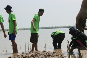 Green Belt Conservation Mangrove 2016