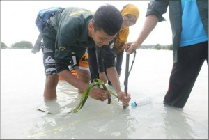 Green Belt Conservation Seagrass 2016